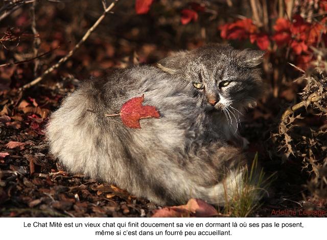 adeline lestage_le chat de la voisine_blog (2)