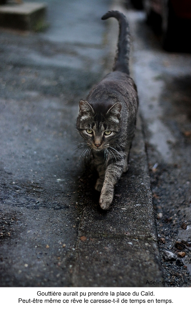 adeline lestage_le chat de la voisine_blog